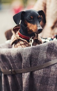 Hundekorb Auto