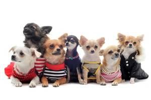 Hunderegenmantel