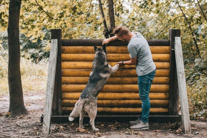 Hunde trainieren