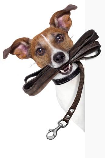 Hundeerziehung stressfrei