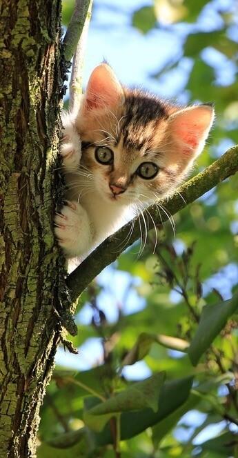 Katze miaut ständig